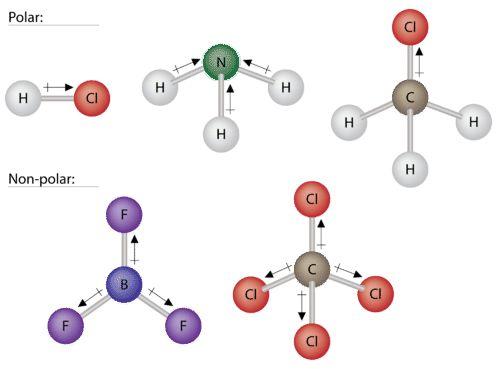 Polar Molecules ( Read ) | Chemistry | CK-12 Foundation