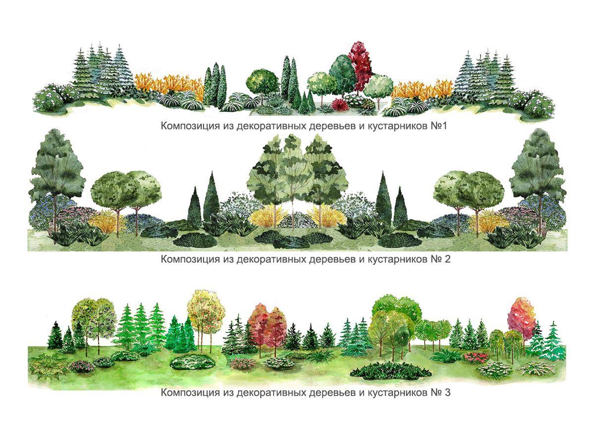 Посадка деревьев и кустарников схема и фото