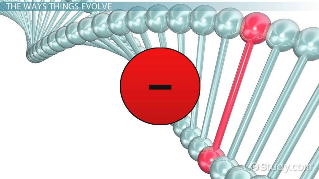 Genetic Drift: Definition, Examples & Types - Video & Lesson ...