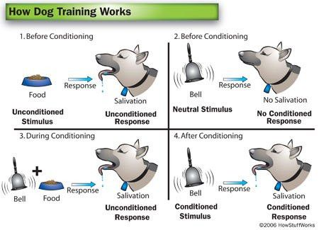 classical conditioning | The Notebook