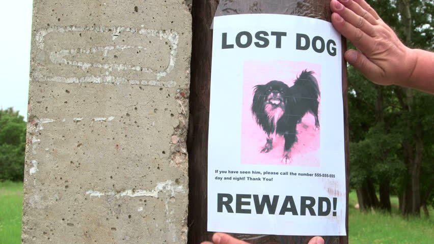 Puppy Looking At Missing Pet Poster On Tree Trunk Stock Footage ...
