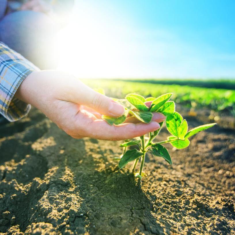 Crop Insurance Arbitration and Litigation Lawyers - Emerson Scott, LLP