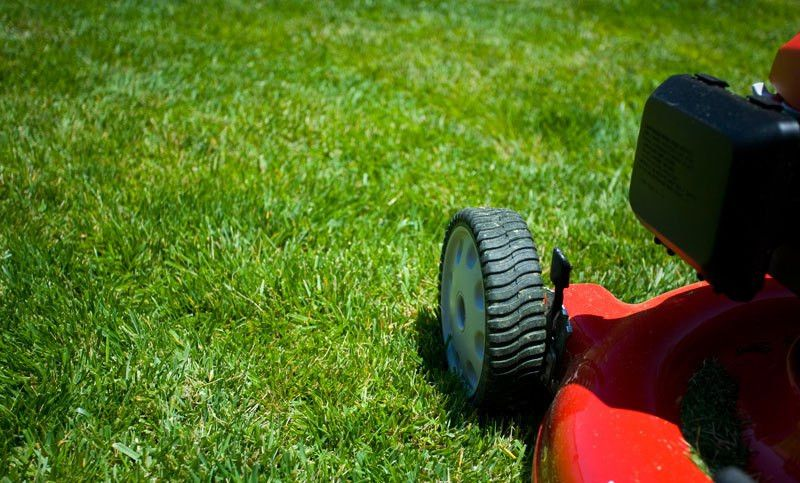 A Year-Round Plan for the Perfect Lawn
