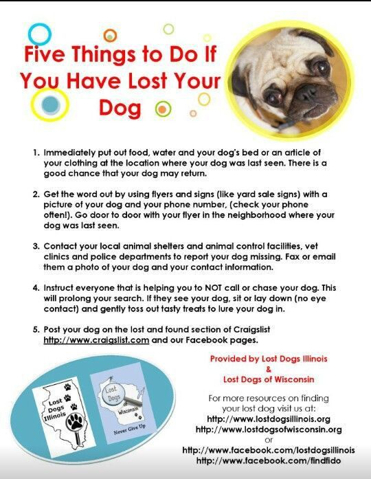 16 best Lost and Found Advice images on Pinterest | Lost pets ...