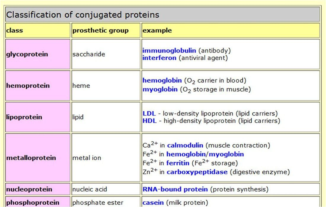 Protein - BIOLOGY4ISC