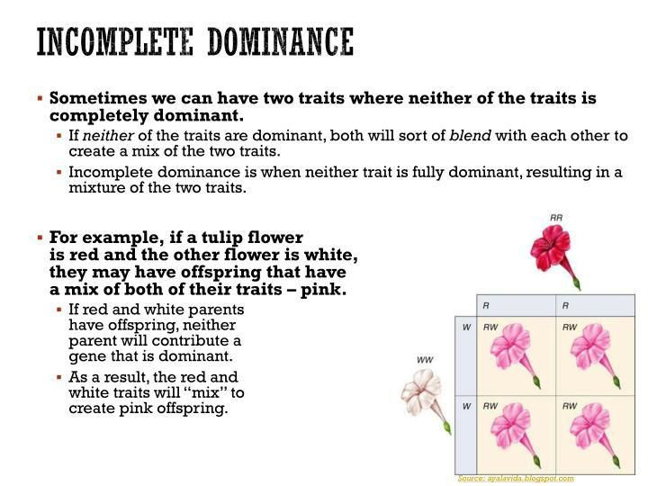 PPT - Co-Dominance & Incomplete Dominance PowerPoint ...