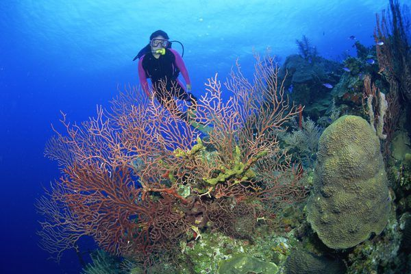 Accomplishments of Being a Marine Biologist - Woman