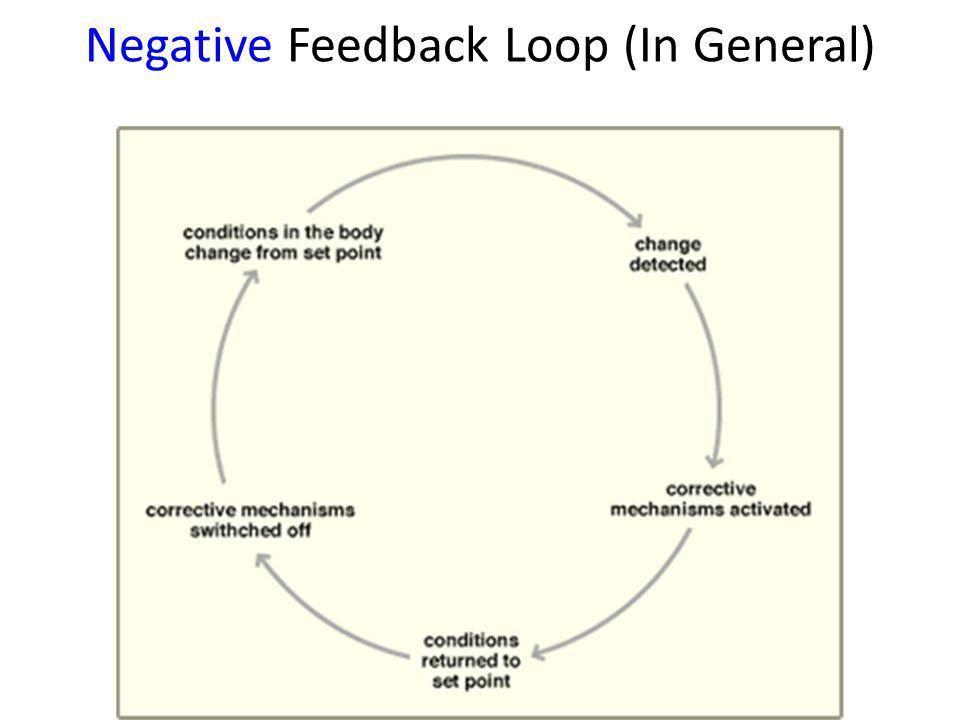 Feedback Loops Positive and Negative Feedback Loop Examples. - ppt ...