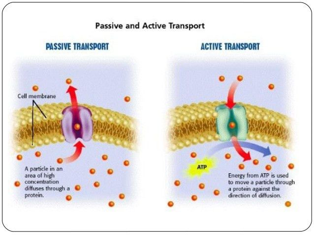 Search results for Active And Passive Transpo - Bioinformatics R&D
