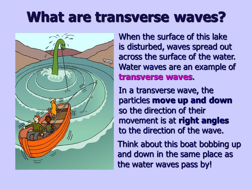 Wave properties. What are transverse waves? When the surface of ...