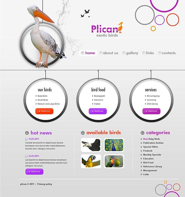 Html5 websites templates for bird sellers
