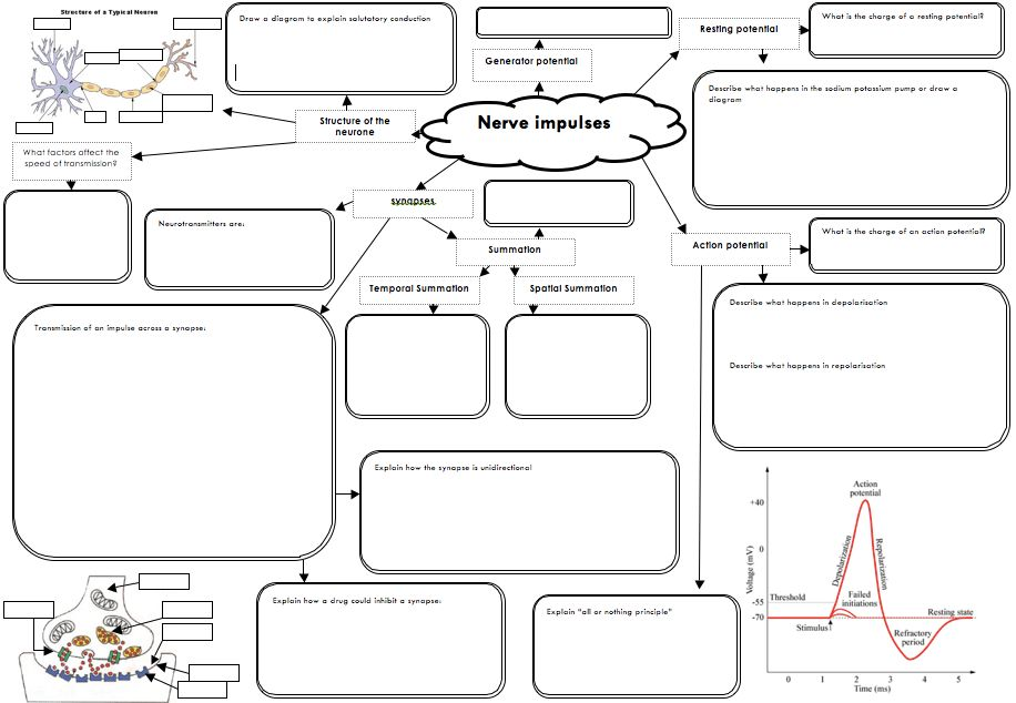 This is a great template for Concept Maps on nerves. Get your ...