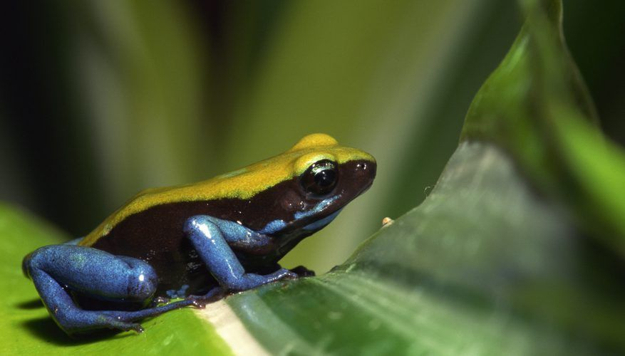 What Animals Show Commensalism in the Rain Forest? | Sciencing