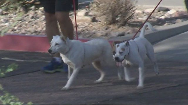 Family of late woman to cover adoption fees at Scottsdale animal ...