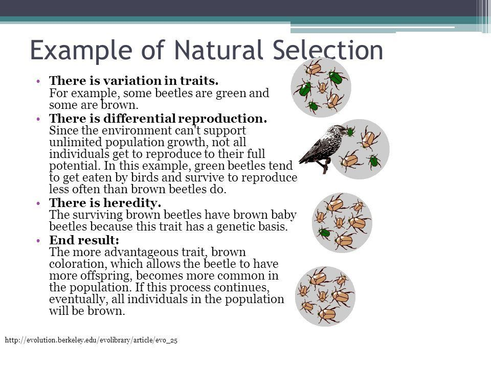 DNA and Genetics in Biotechnology Objective 14.01: Explain the ...