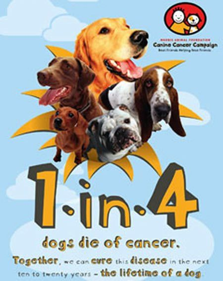 Itchmo: News For Dogs & Cats » Blog Archive » Free Canine Cancer ...