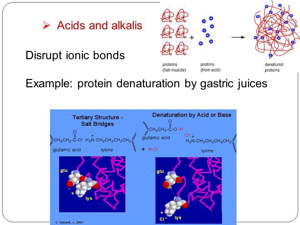 Physical and chemical properties of proteins. Denaturation. - ppt ...