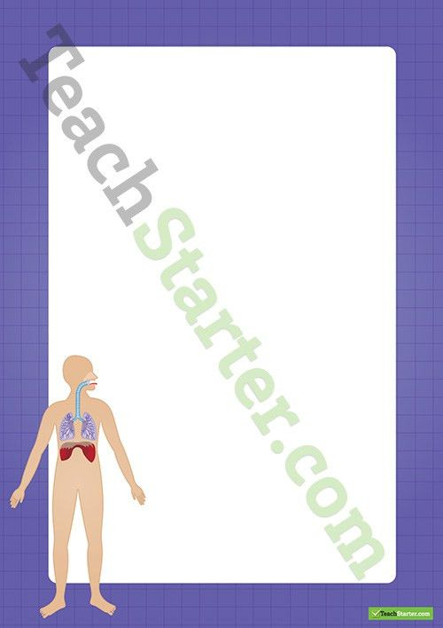 Human Body Respiratory System Border - Word Template Teaching ...