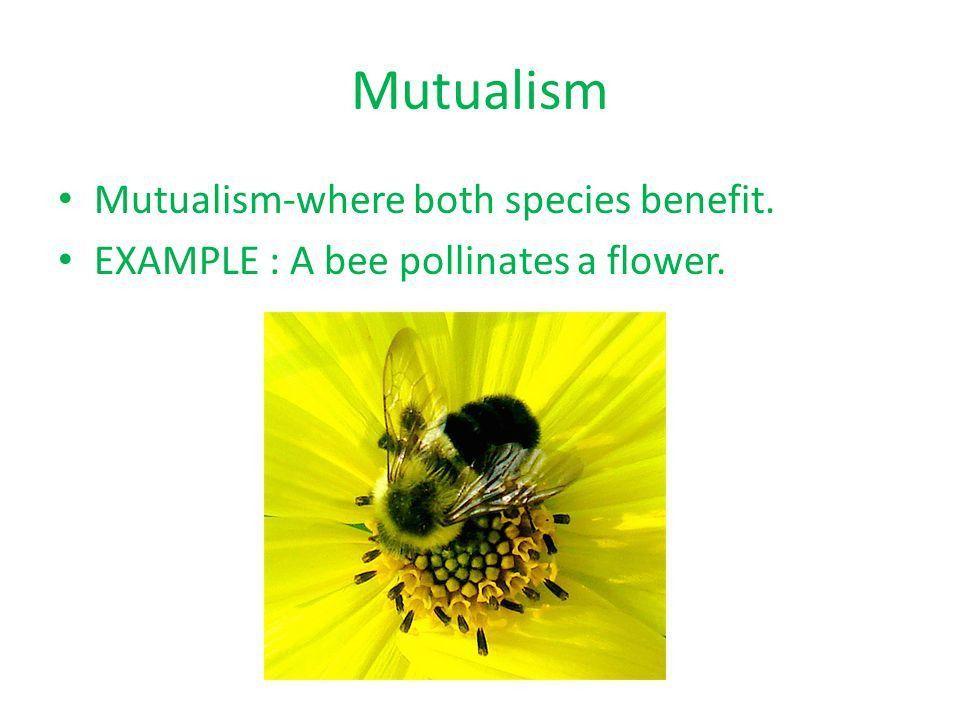 10 th Period Symbiosis Project Paige & Ashley. Mutualism Mutualism ...