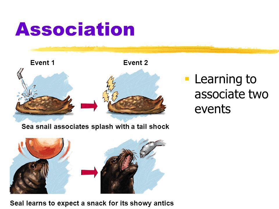 Learning: Classical Conditioning. Learning  Learning ...