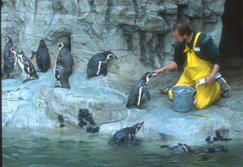 So You Want to be a Zookeeper? :: Saint Louis Zoo