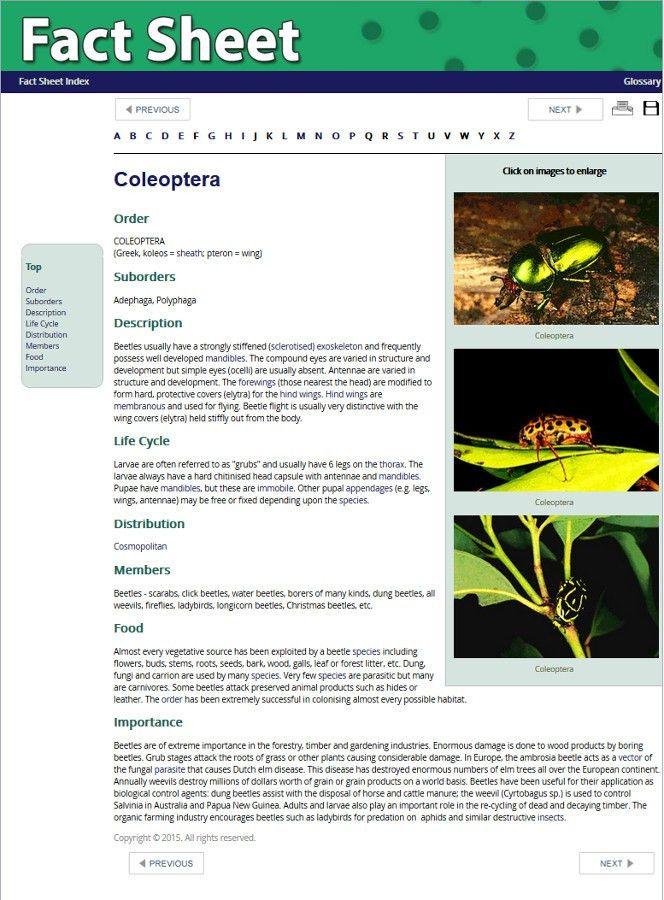 Fact Sheet Template | cyberuse