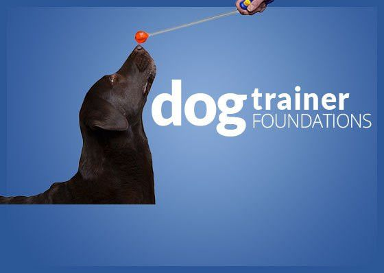 Karen Pryor Academy | Learn Dog Training | Become a Dog Trainer