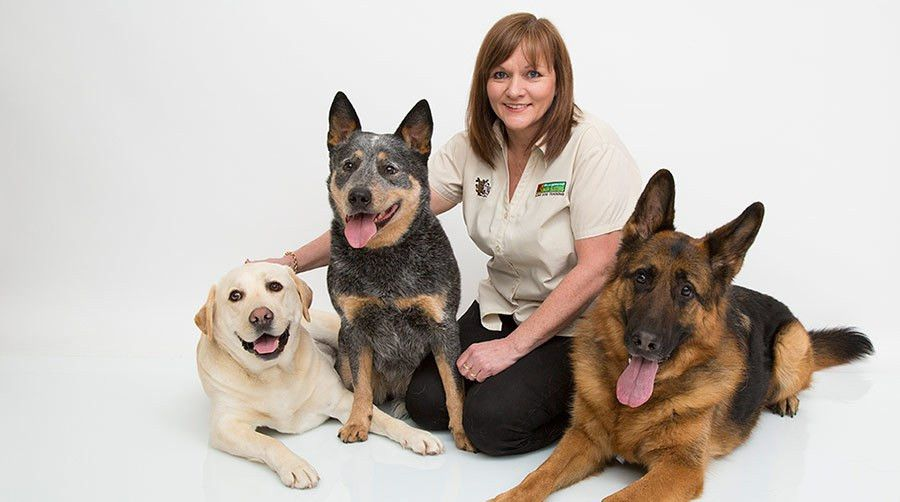 Our Services - Home Dog Training. Bark Busters USA Dog behavior ...