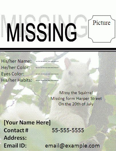 Missing Cat Poster Template | Free Business Templates