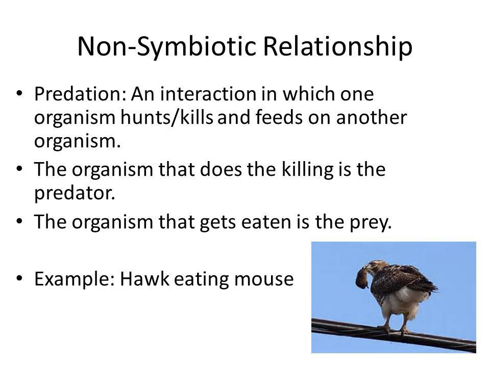 Ecology Notes for Sept. 28 through Oct ppt video online download