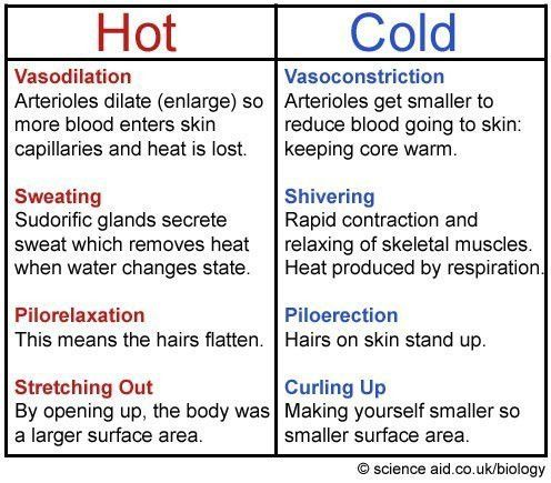 Homeostasis: Negative Feedback, Body Temperature, Blood Glucose ...