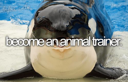 become an animal trainer | Things I Like | Pinterest | Istruttori ...