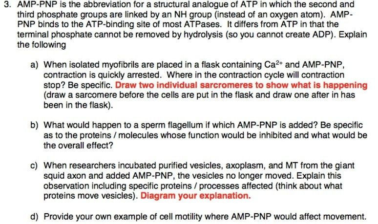 AMP-PNP Is The Abbreviation For A Structural Analo... | Chegg.com