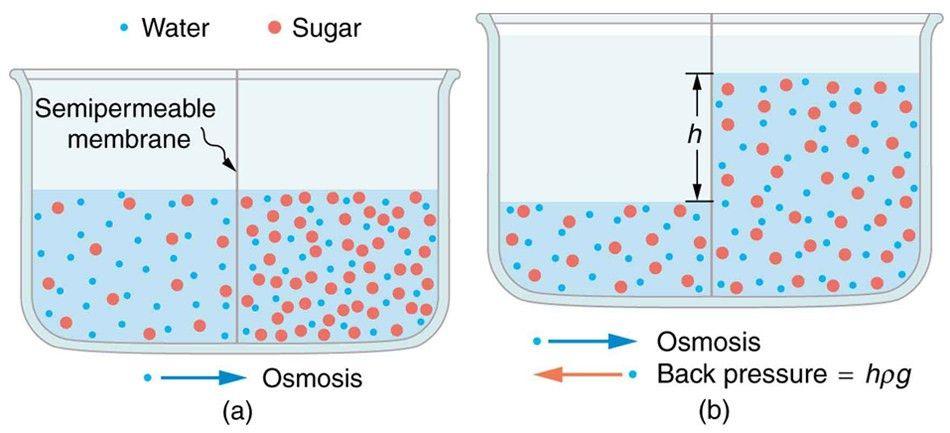 12.7: Molecular Transport Phenomena: Diffusion, Osmosis, and ...