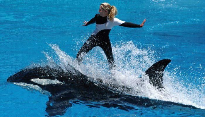 How to Become a Marine Animal Trainer