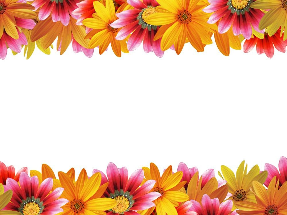 Daisy Border Free PPT Backgrounds for your PowerPoint Templates