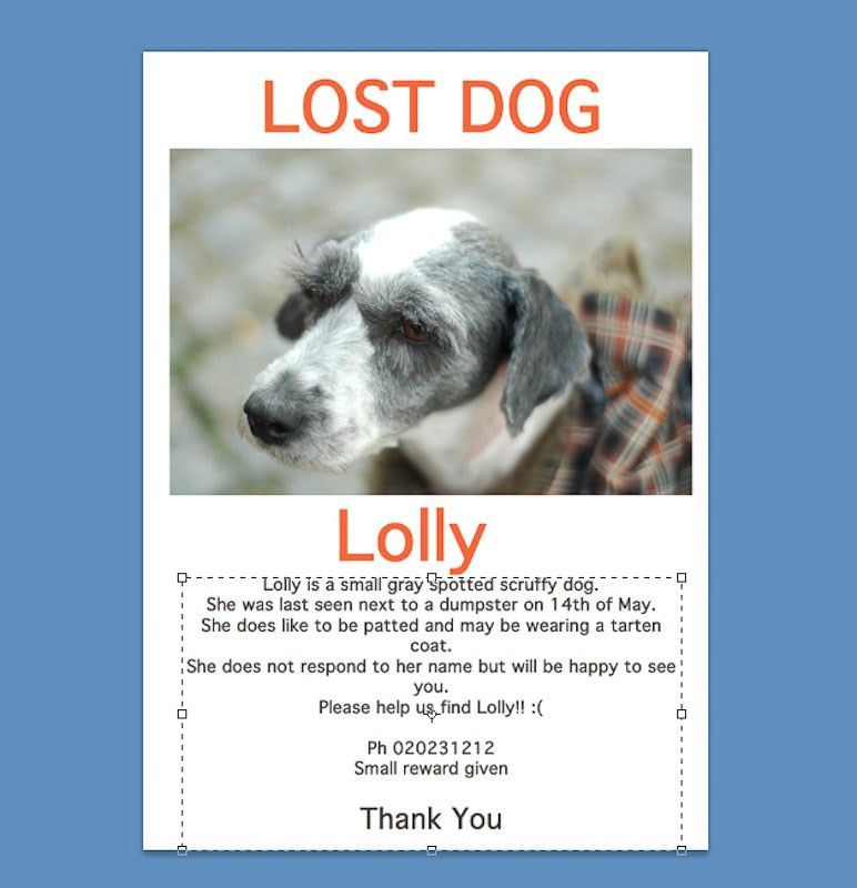 Image Gallery lost pet poster