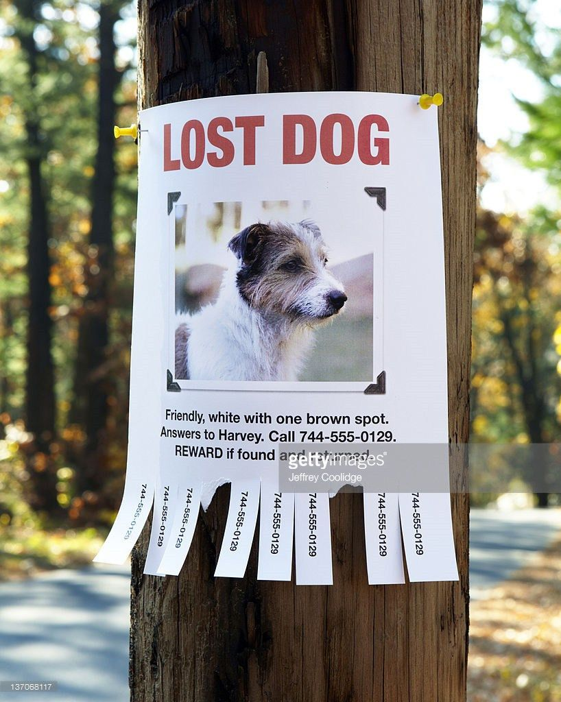 Lost Dog Poster Stock Photo   Getty Images