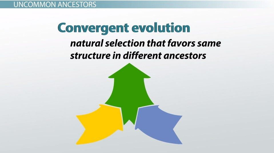 Convergent Evolution: Examples & Definition - Video & Lesson ...