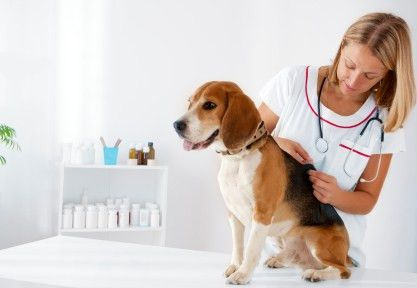 Veterinary Technician Programs In Utah
