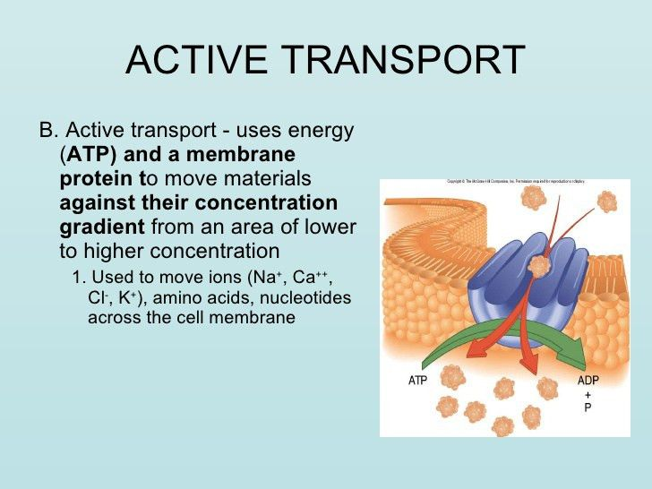 Transport Across Cell Membranes