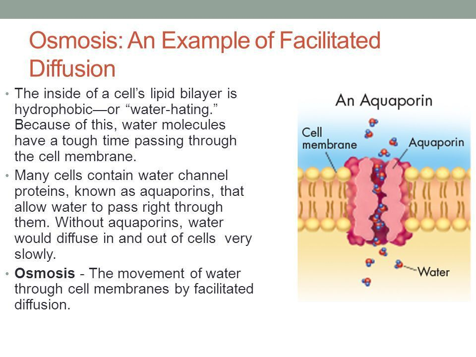 Chapter 7 Cell Structure and Function - ppt video online download