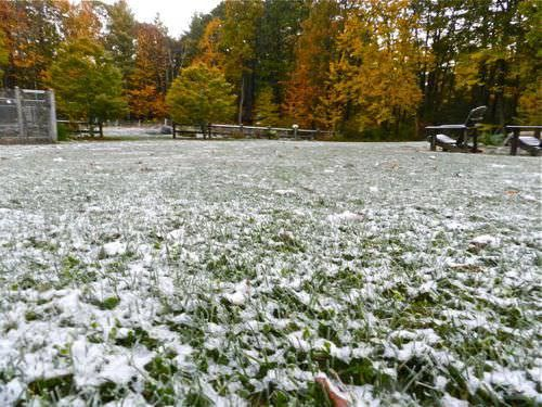 Lawn Care in Winter