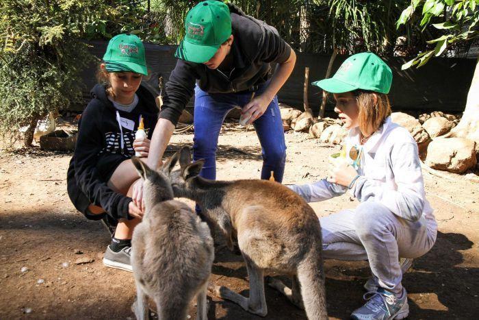 Junior zoo keeper training at Cooberrie Park Wildlife Sanctuary ...