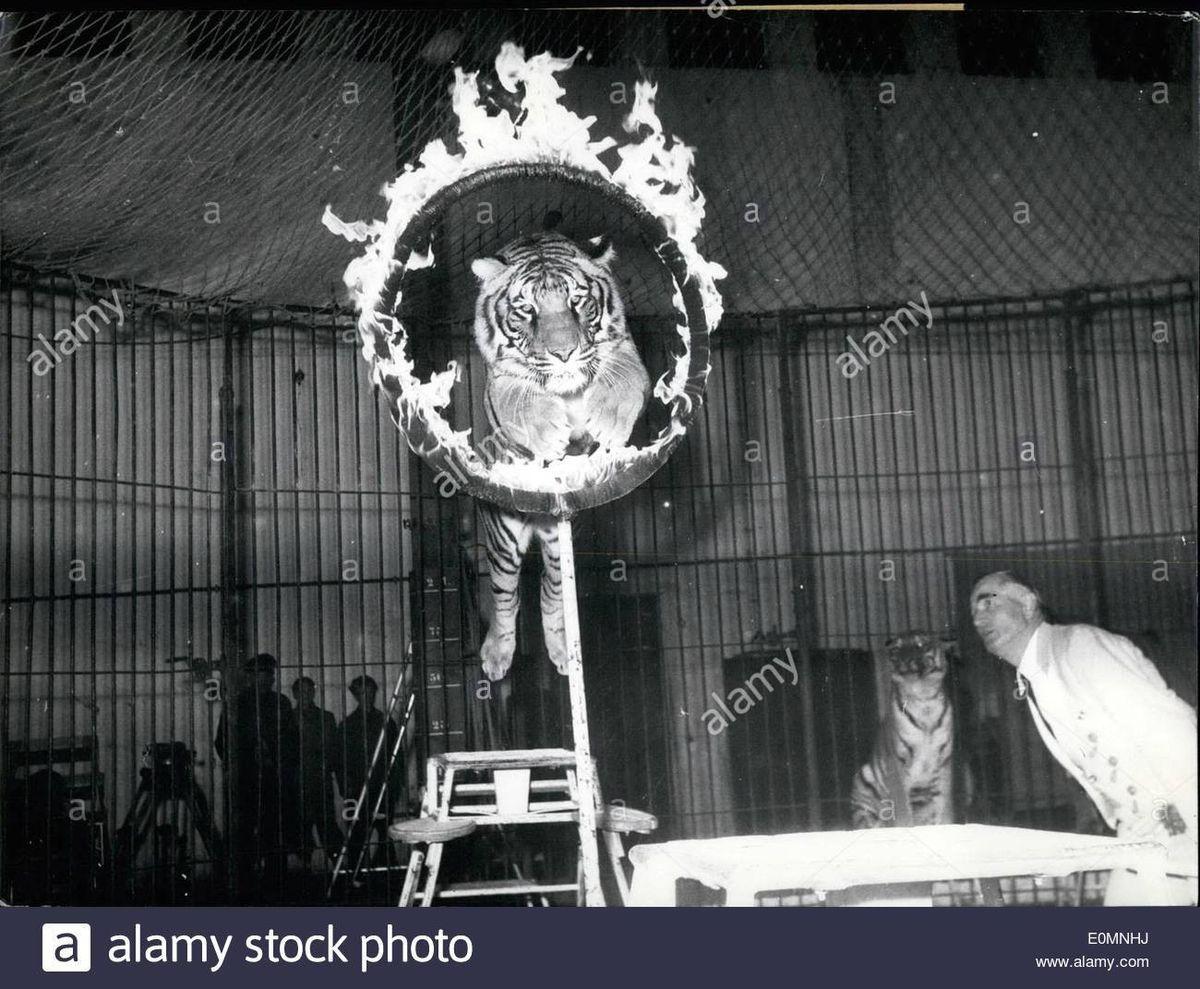 Jan. 01, 1956 - Dangerous Act at Hagenbeck. Famous animal trainer ...
