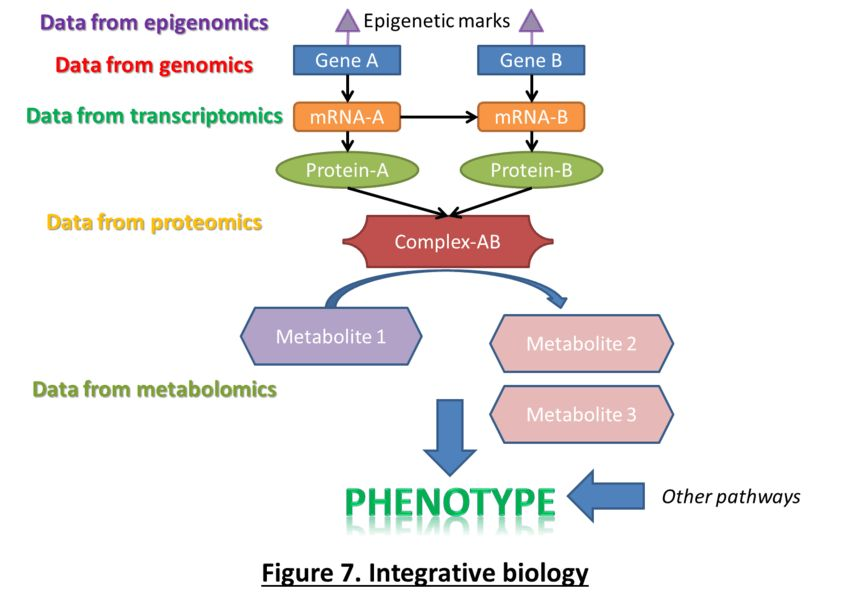 In this theoretical example, each level of Omics is studied with a ...