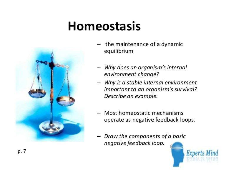 homeostasis-130412060434-phpapp02-thumbnail-4.jpg?cb=1365748113