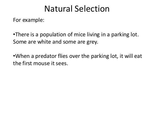 02b natural selection