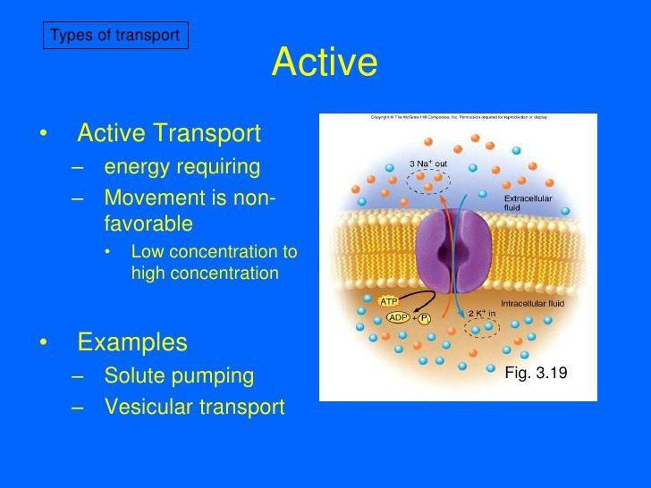 7-Membrane Transport I