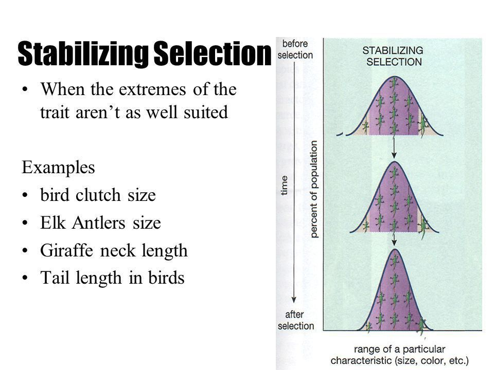 Natural Selection It is a two step process: - ppt video online ...